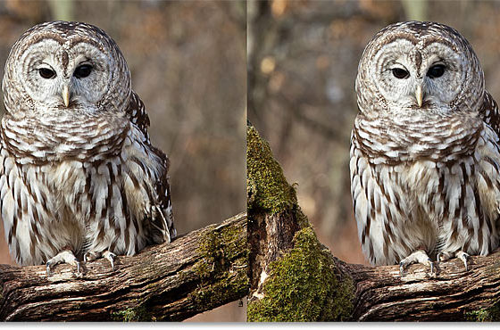 How to Sharpen Your Image in Photoshop